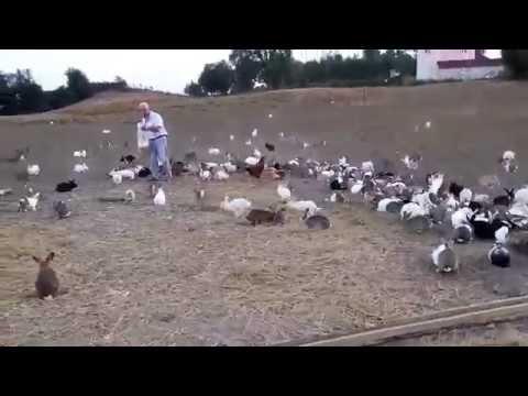 Sinop Tavşan Çiftliği