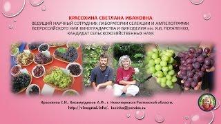 Красохина СИ, Хисамутдинов АФ - виноград, виноградарство, презентация