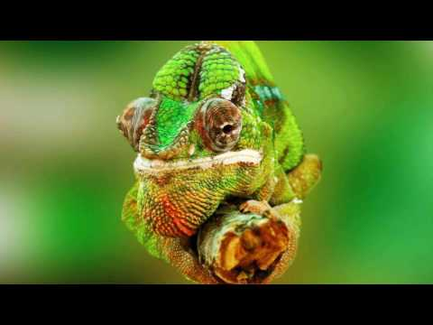 Bob Baldwin   Chameleon 3000