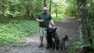 Команда ко мне, три типа собак, способность к дрессировке подзыву