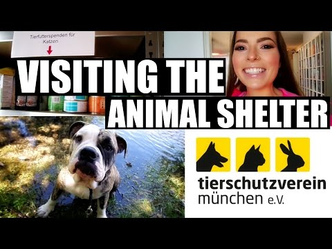 VISITING THE MUNICH ANIMAL SHELTER