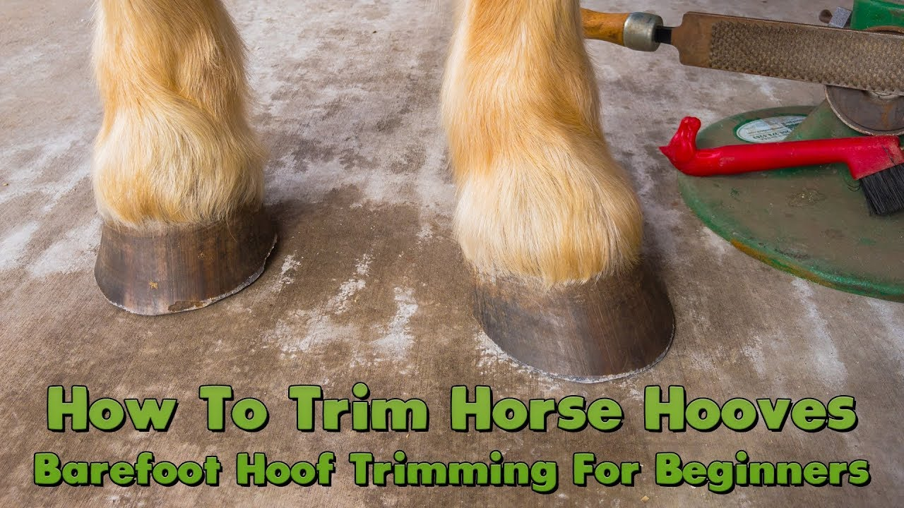 How To Trim Horse Hooves: Barefoot Hoof Trimming For Beginners - YouTube