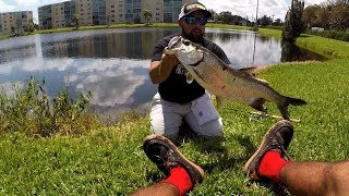 Fishing the Dead Dog Creek for Saltwater Fish!