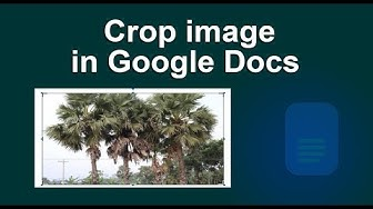 How to Crop and adjust an Images in Google Docs