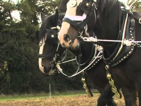 Shire Horse Society Demonstration Video