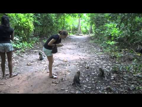 Feeding the Monkeys in Ghana