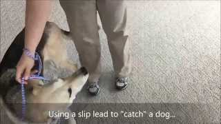 "Pet First Aid Class Training: Slip Lead, Best Tool To ""catch"" A Loose Dog"