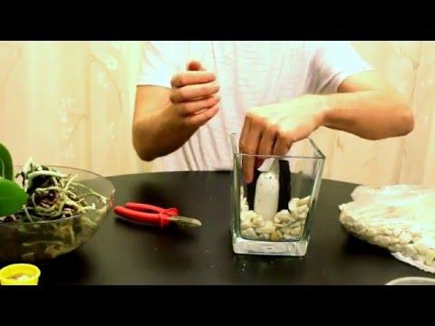 Фаленопсис  в стеклянной вазе