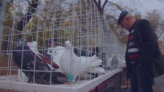 В Керчи в небо выпустили сотню голубей