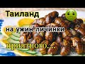 Ужин жареные тараканы Паттайя 2019 Таиланд 2019