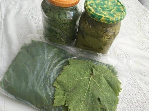 Qışa Hazırlıq- Dolmalıq üzüm Yarpağının Qışa Tədarükü