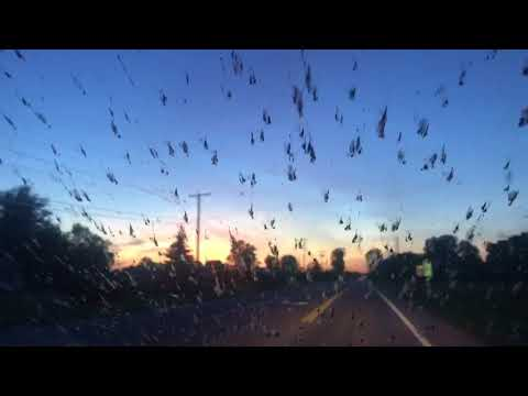 Fish fly Bug blizzard splatting on windshield