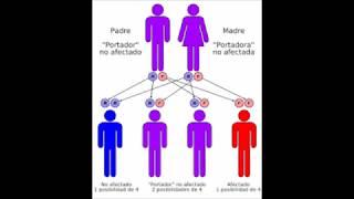 Muñecas afecciones la genéticas de