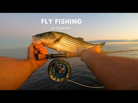 Fly Fishing Striped Bass In Long Island Sound