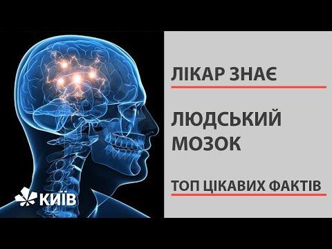 Цікаві факти про людський мозок, які вражають