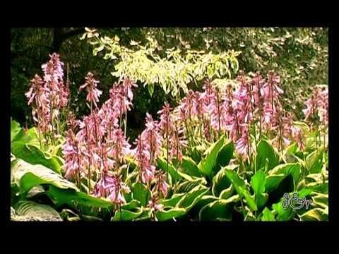Fiori Nel Mondo.Flowers Of The World Fiori Nel Mondo Normandie Youtube