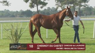 Grand Show Anglo 2016 : Lot 10 - CHESNOT DU CASTET