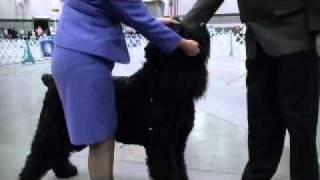 Jackson Ms Dec 18 2010 Black Russian Terriers