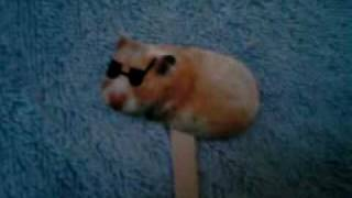 cat and blind hamster with pirana has comercial with orbit