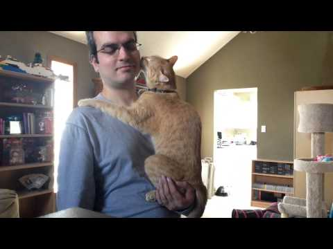 Cat Acts Like a Baby – Again :)