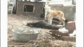 Хозяйка частного дома сутками держала своих собак без воды и еды