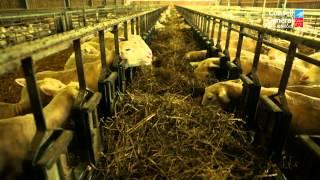 CG21 Rencontre agricole - Élevage ovin
