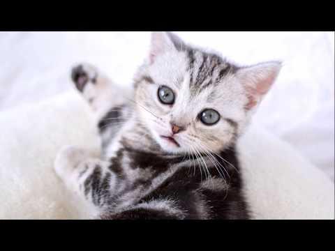 🐾🐾😺 11 types of cat breeds 😺🐾🐾
