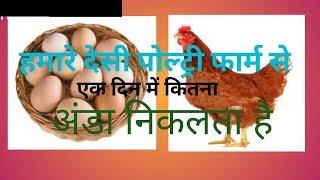 कम लागत में देसी मुर्गी से ज्यादा अंडा कैसे प्राप्त करे