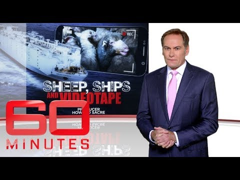 Sheep, ships and videotape: Part one | 60 Minutes Australia