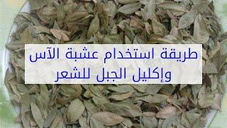 طريقة استخدام عشبة الآس وإكليل الجبل للشعر