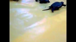 рождение черепашек