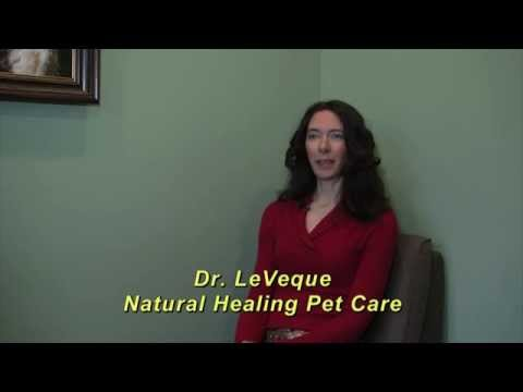 Business in Berkley Natural Healing Pet Care