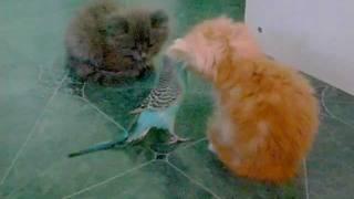 Попугай и котята