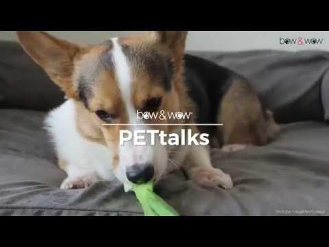 bow & wow PETtalks: Dog Nutrition 101