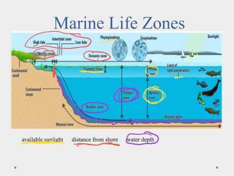 2.2a The Diversity of Ocean Life
