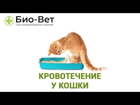Порядок создания и использования скан-копии паспорта РФ