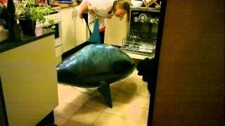 Flying Shark Hunts My Poor Dog