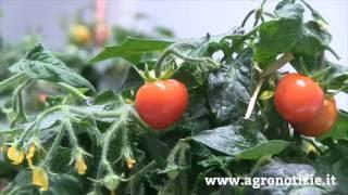 L'innovazione che stimola la crescita delle piante