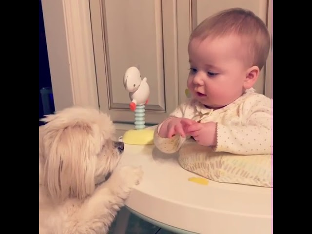 Baby Feeds Dog Snacks and Laughs – 1026320