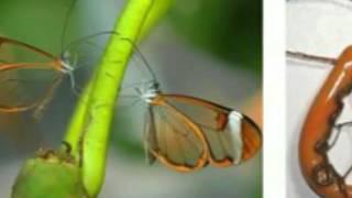редкие бабочки няши!