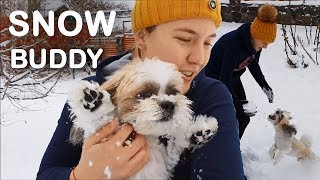 Shih tzu Snow | Shih tzu Playing | Snow Puppy | Yuki Shih tzu | Dog playing in snow