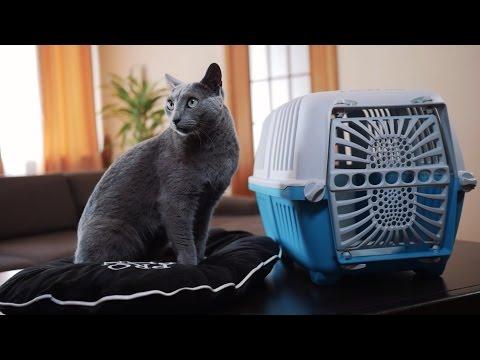 Как перевезти кошку к месту отдыха ➠ Советы ветеринара