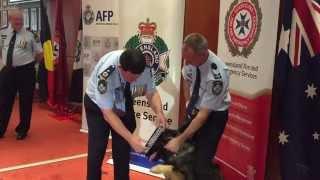 Axel receives his police dog collar!
