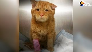 Cat Who Was About To Be Put Down Gets A Second Chance