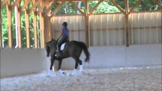 Cloverlea Dressage Sale horse--Amadeus