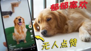 Golden Retriever was addicted to playing Douyin, and finally became popular with this!