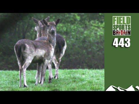 Fieldsports Britain - Deer Ambush