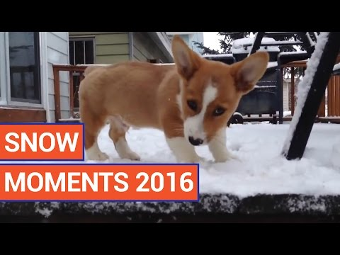 Happy Snow Moments Video Compilation 2016