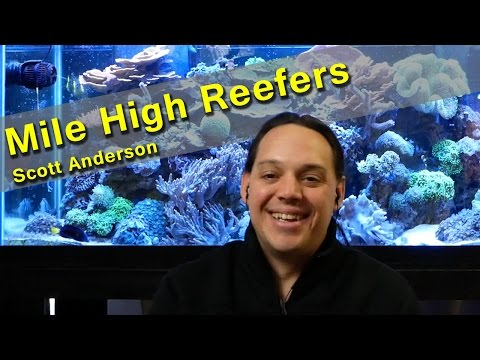 Mile High Reefers Q&A with Scott Anderson!