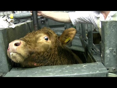 What The Animal Food Industry Doesn't Show You [Warning: Graphic Content]